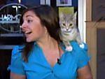 Celebrity_cat