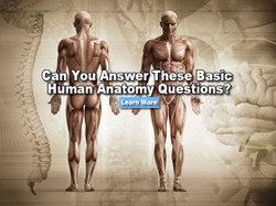 Human_anatomy_quiz