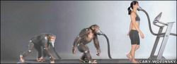 _44002980_chimp416